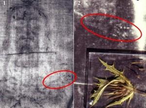 Зображення колючки з вінця на плечі Христа